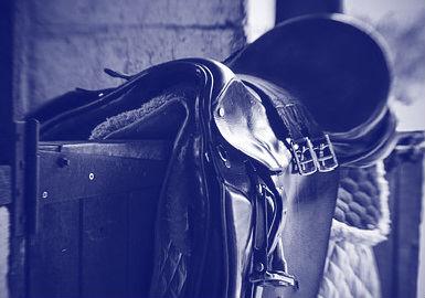 Paard daags na koop overleden