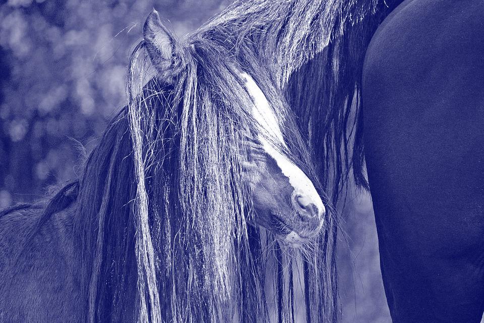 Paarden verstopt