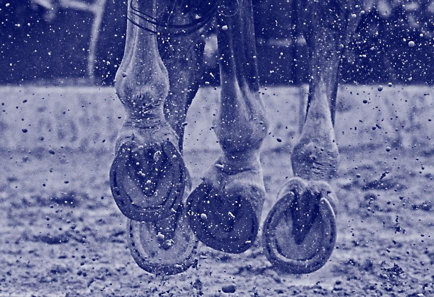 Waardevermindering paard na hoefbevangenheid