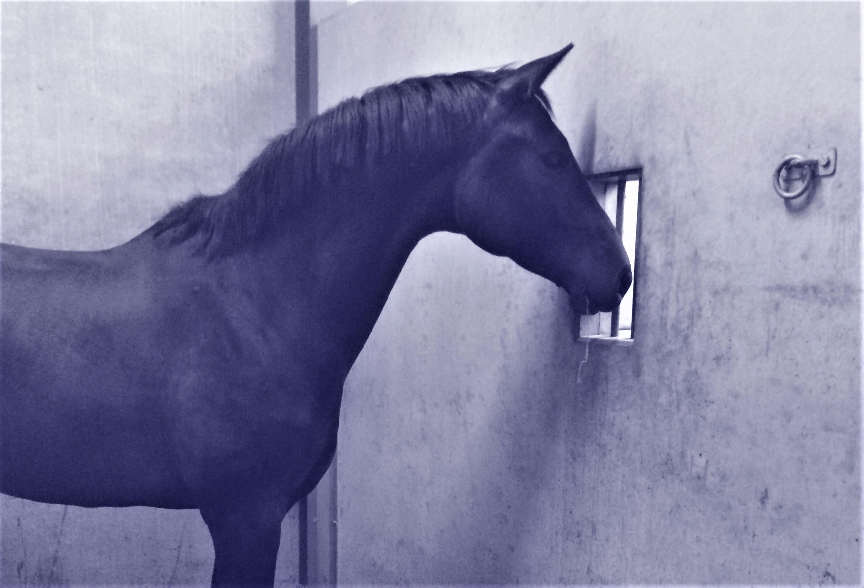 Paarden achterhouden
