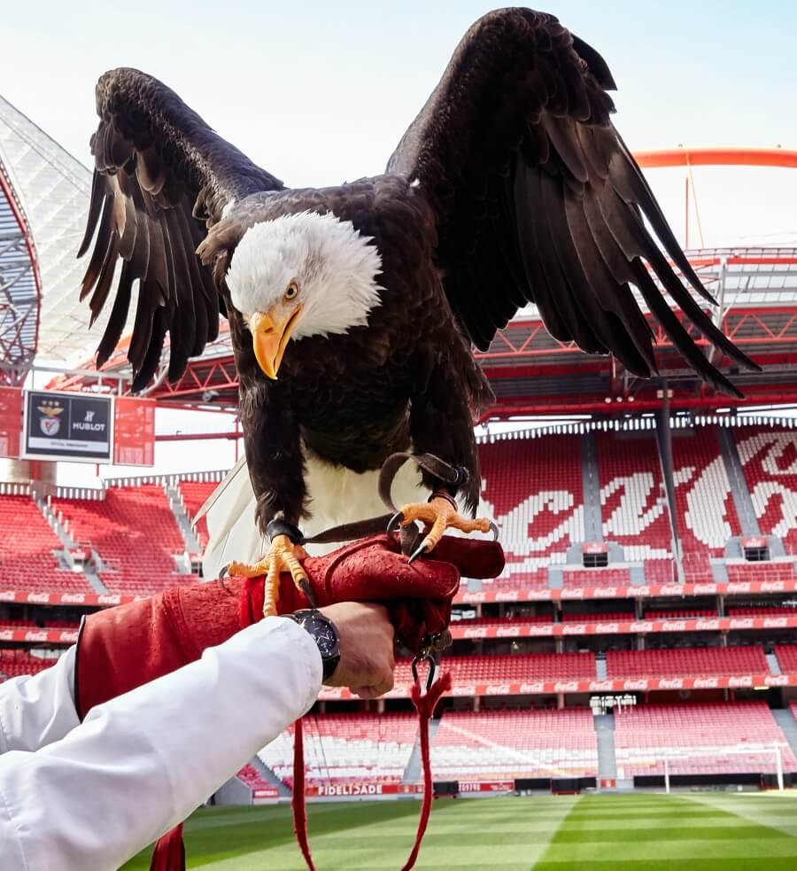Aguia Vitoria eagle Benfica Hublot