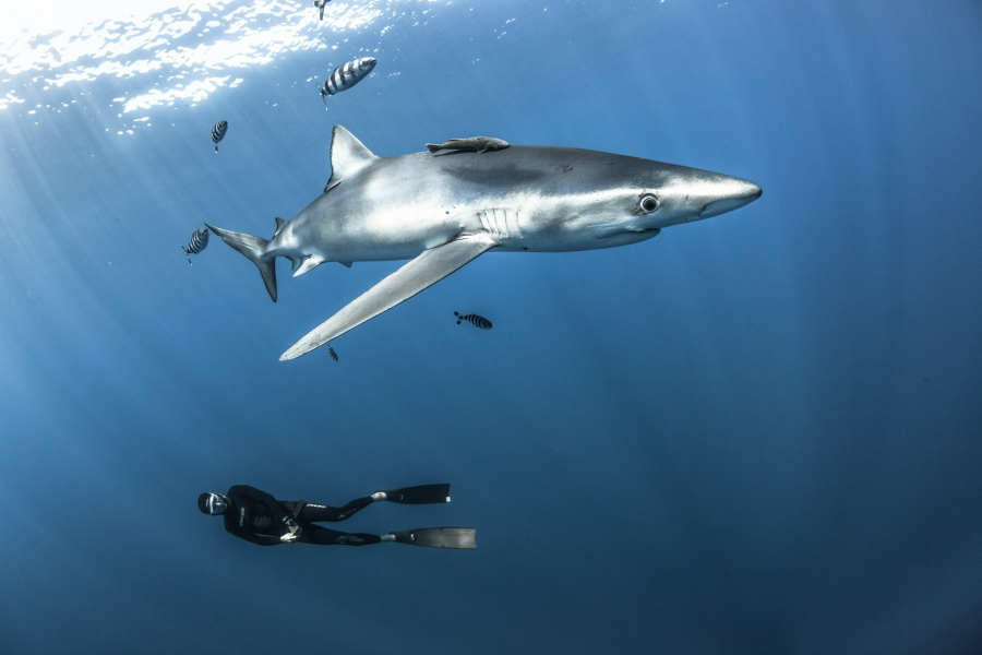 Fearless Free Diver Fred Buyle Partners With Ulysse Nardin