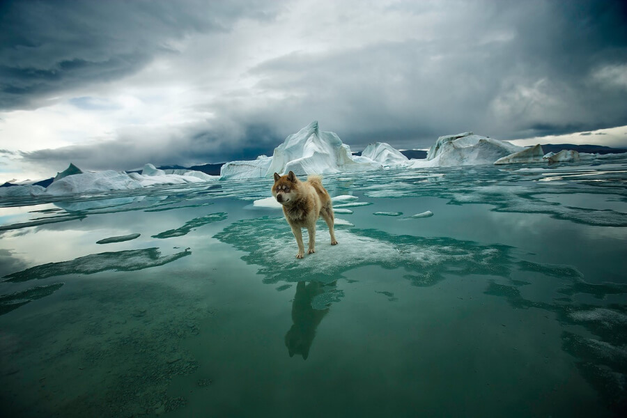 Dog on South Pole