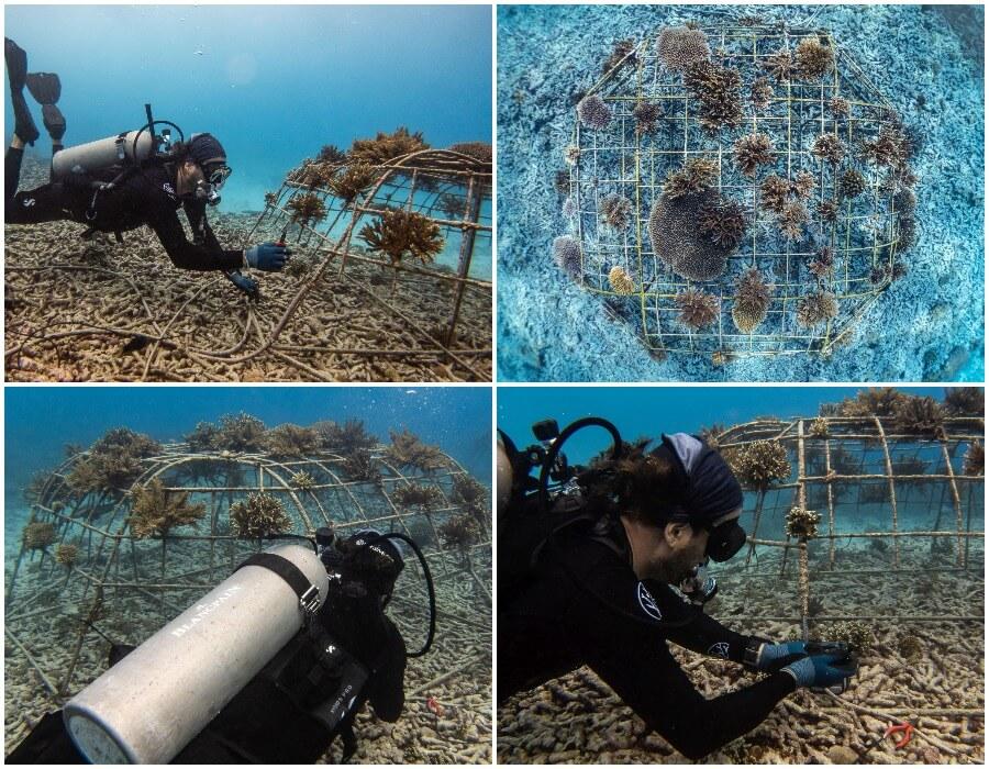 Coral Restoration Fregate Island Seychelles