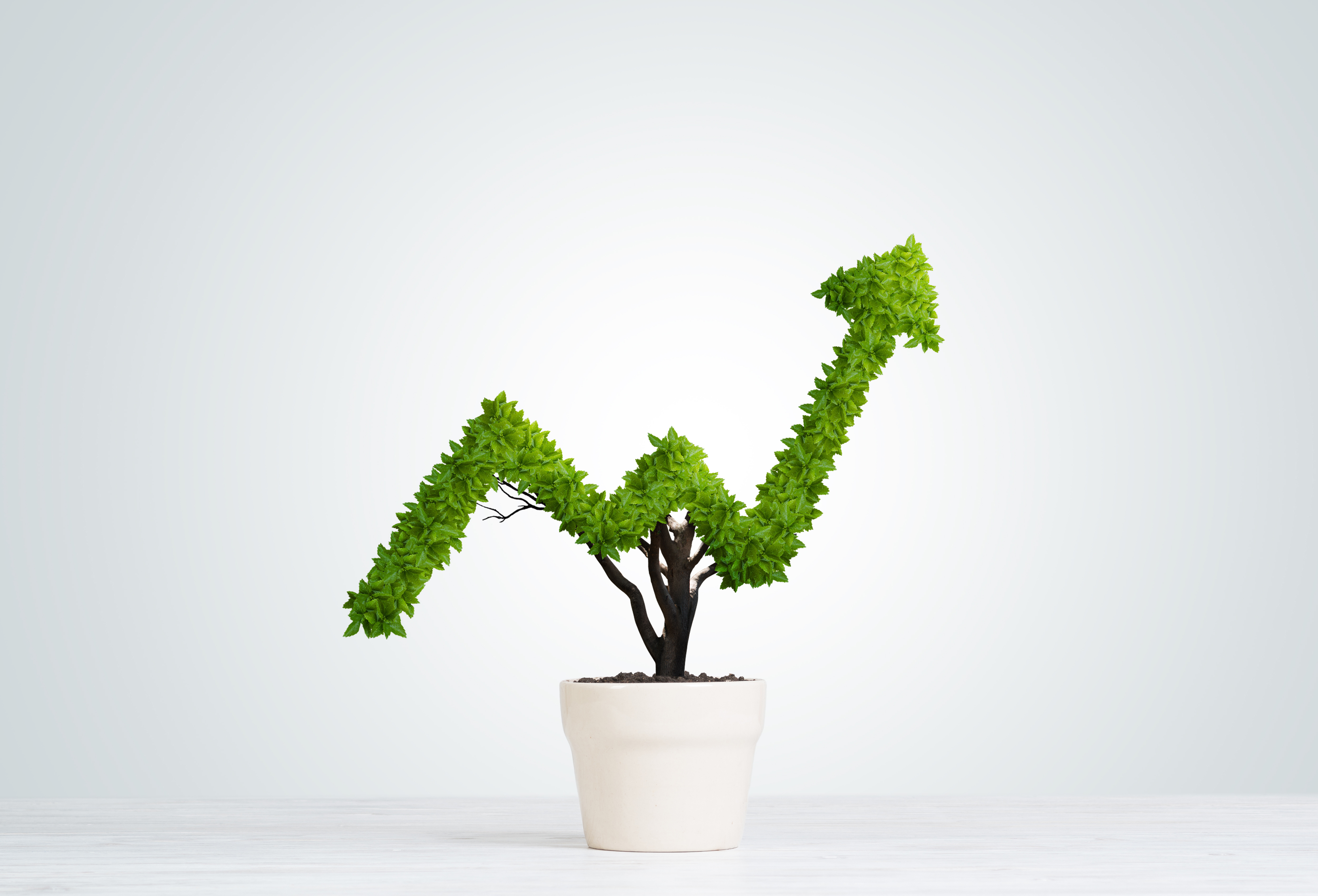Small tree growing in the shape of a positive investment arrow.