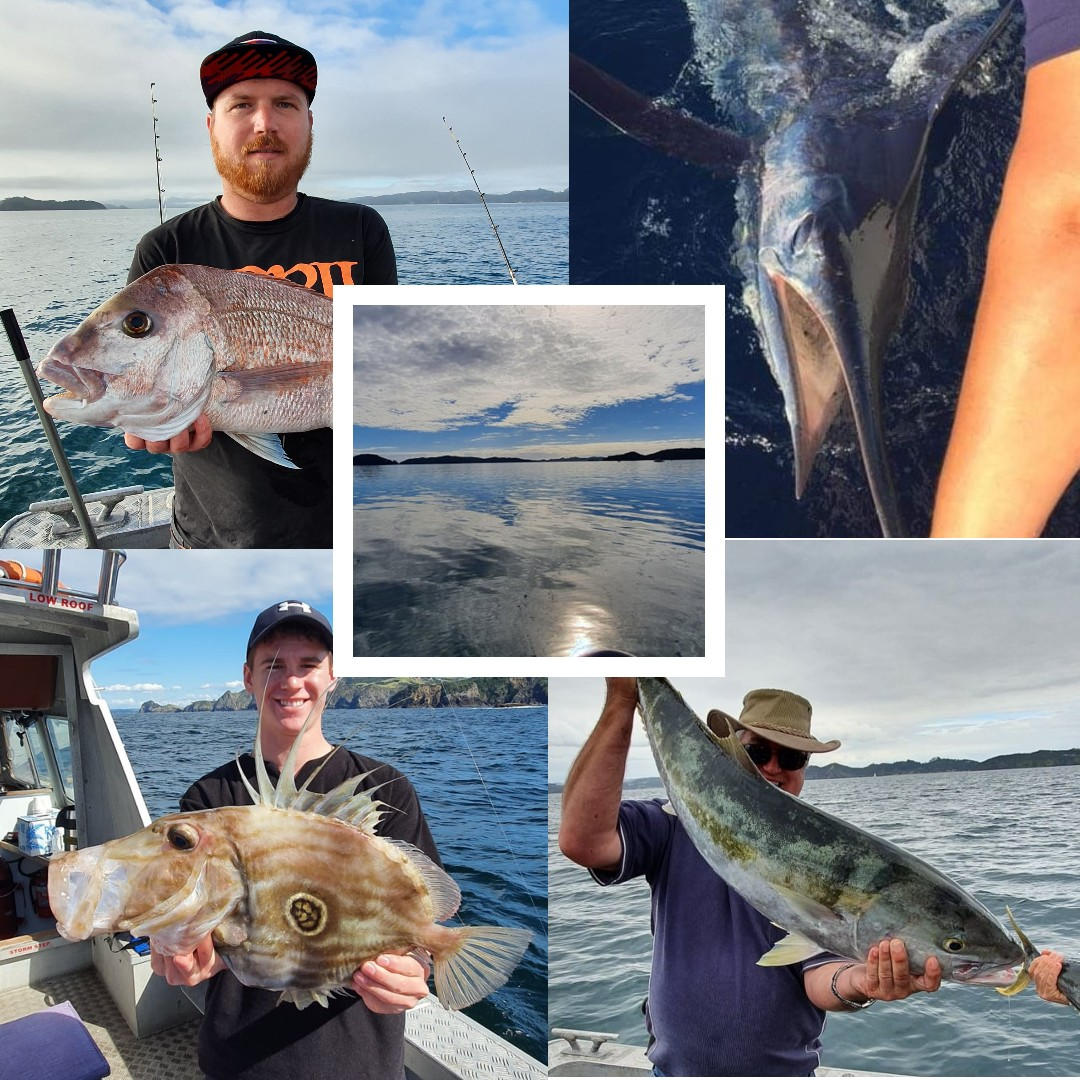 Bay of Islands Fishing Charter marlin snapper kingfish