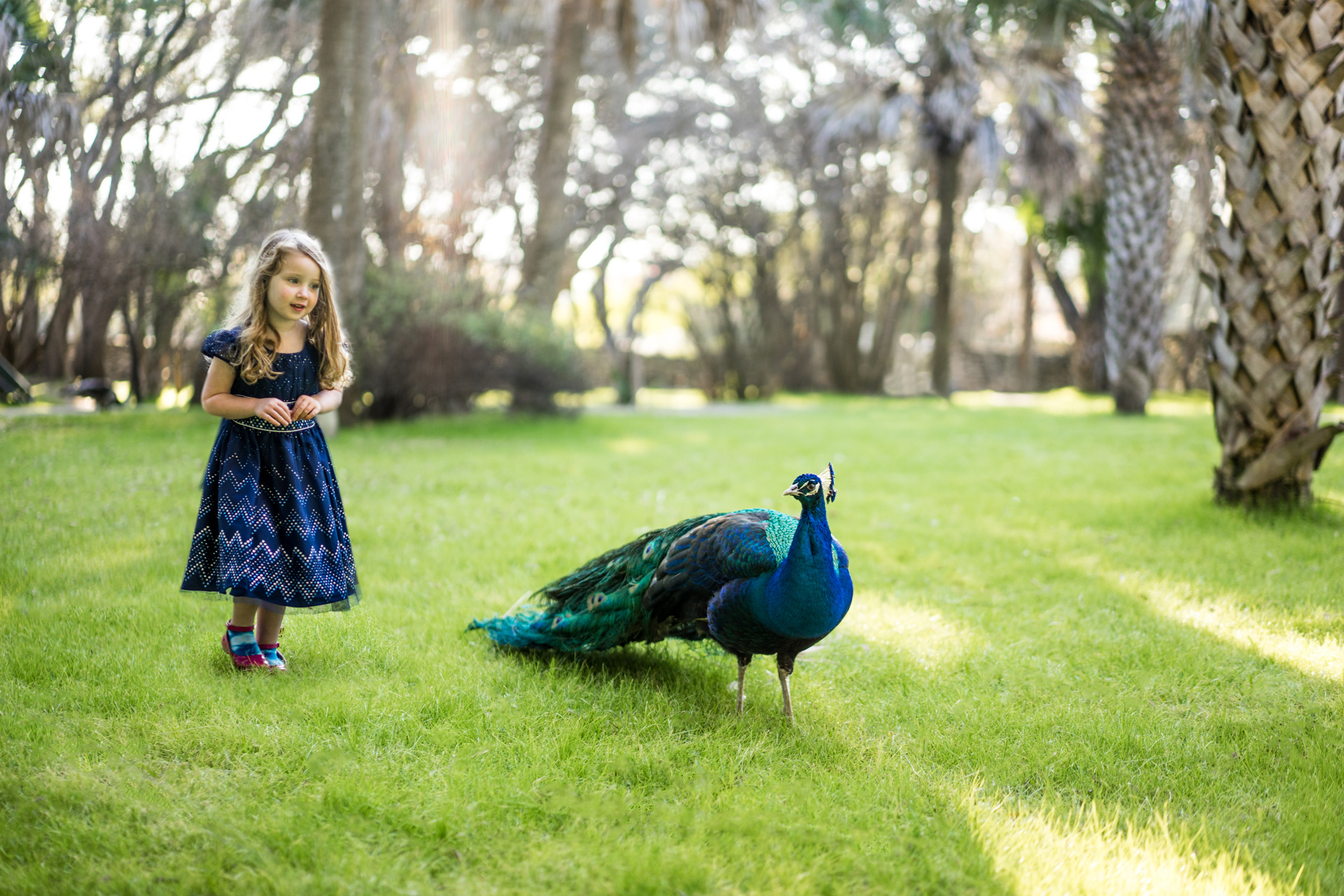 Kid Portrait with Peacock in Austin Texas