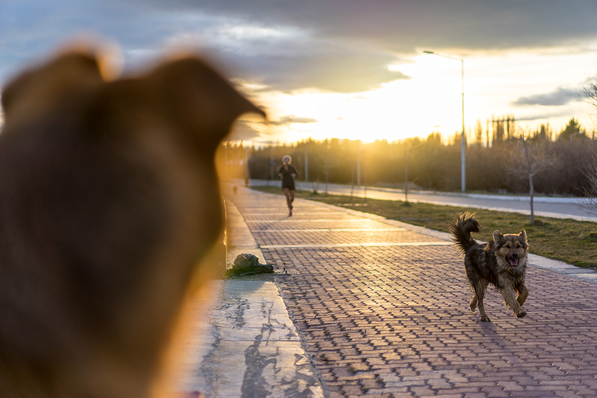 Pet Dogs Running in Argentina
