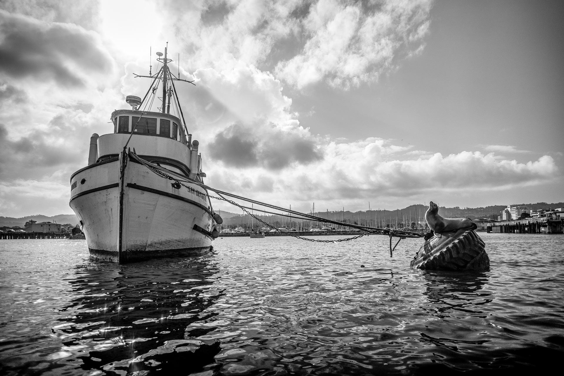 Monterey California Boat and Seal Marina