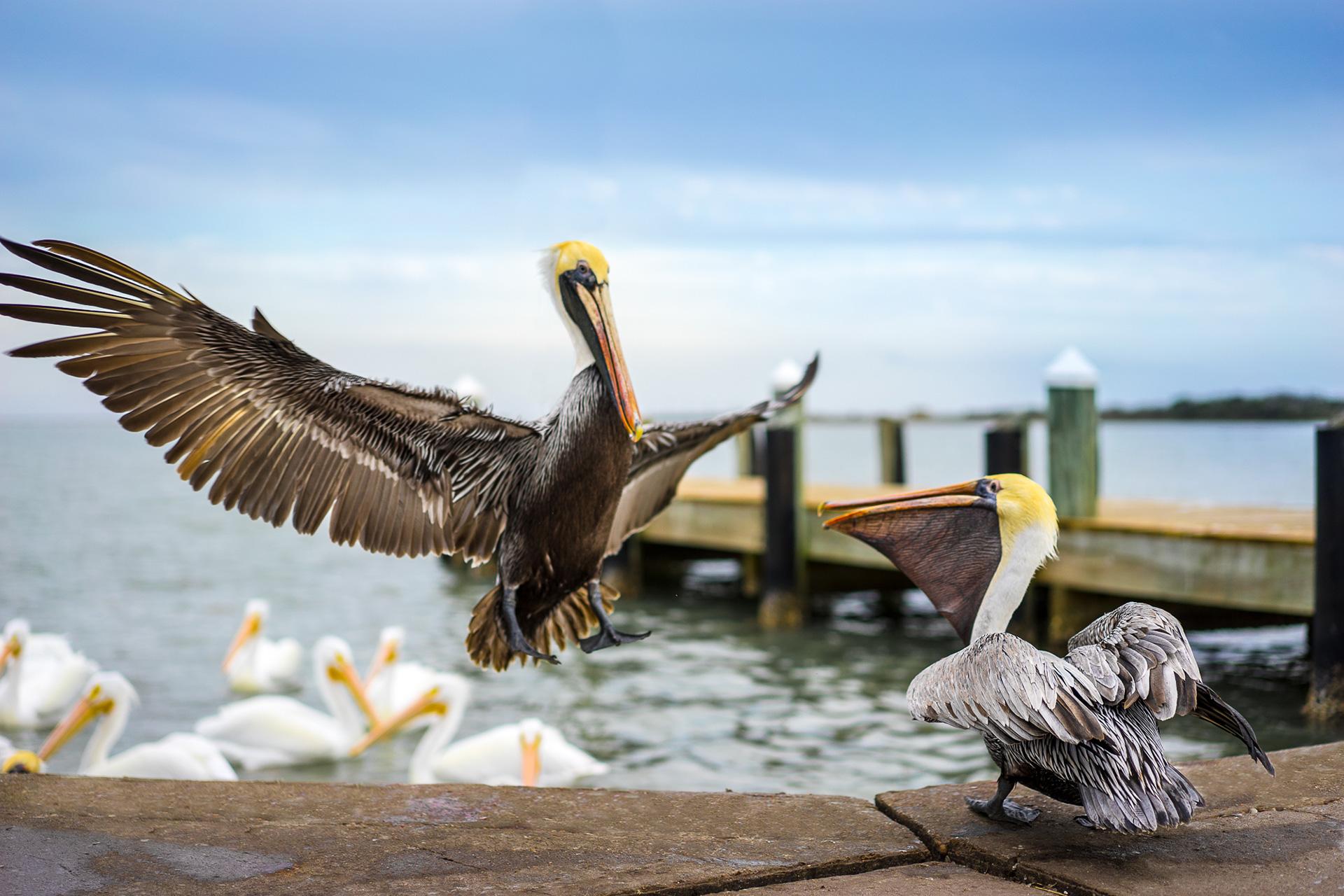 Large Bird on Texas Coast