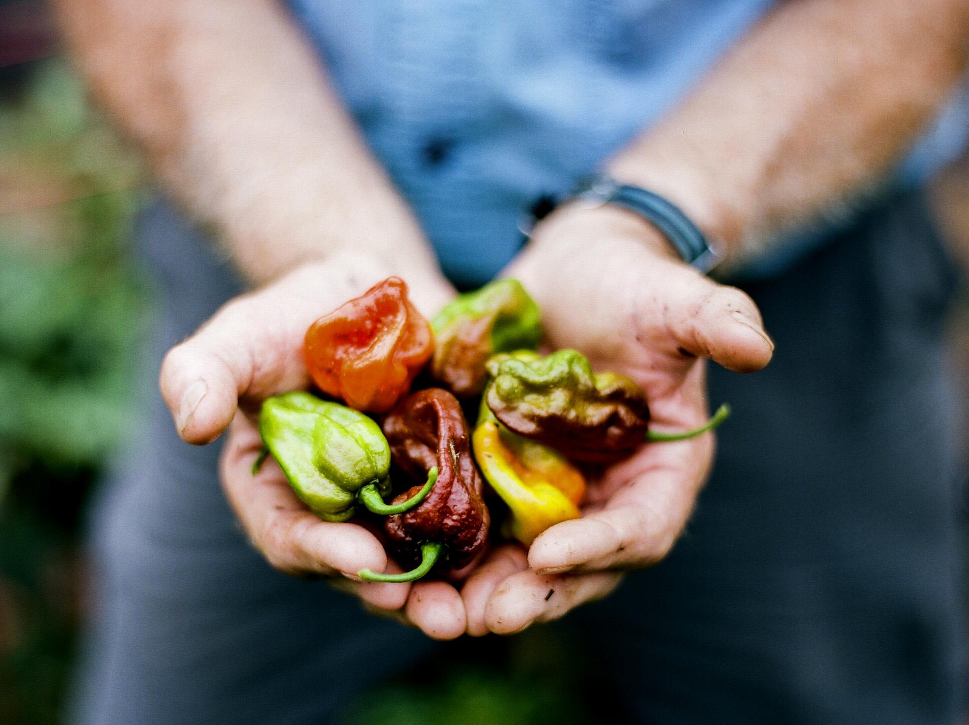 Wishbone's Garden with Blue Moon Specialty Foods