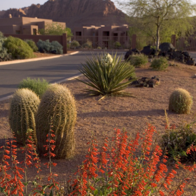 Happiness is Blooming this Spring at Red Mountain