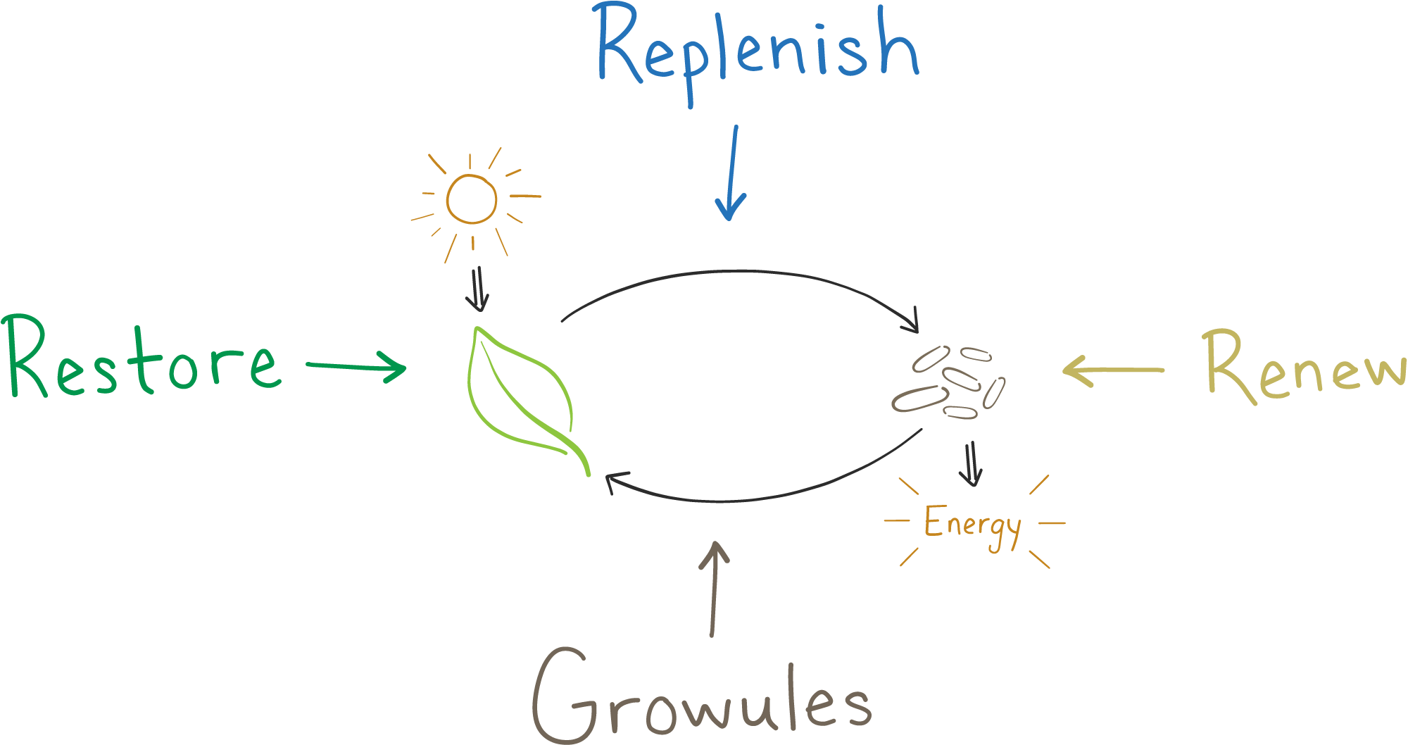 Diagram of photosynthesis and cellular respiration