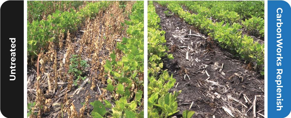 CarbonWorks Replenish speeds plant residue breakdown by boosting microbial activity