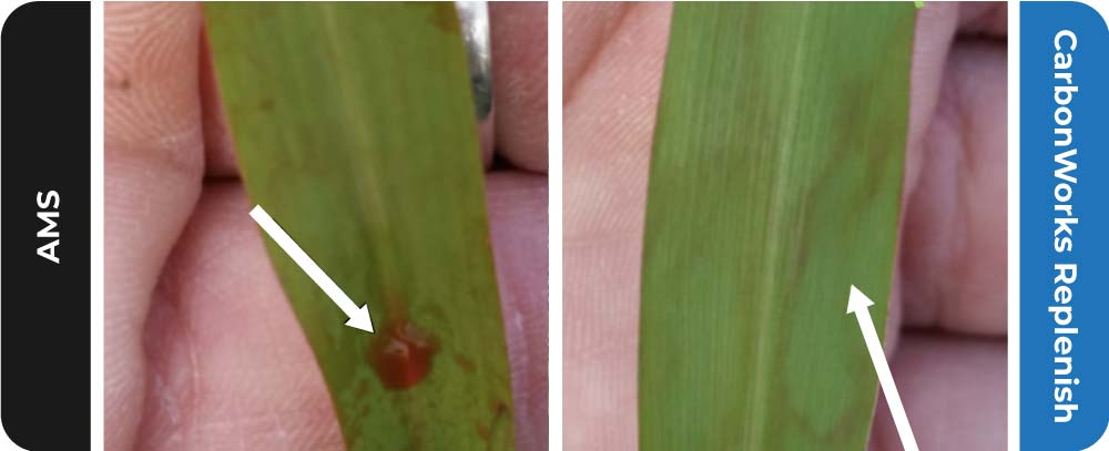 CarbonWorks Replenish increases spray intake by maintaining open leaf pores