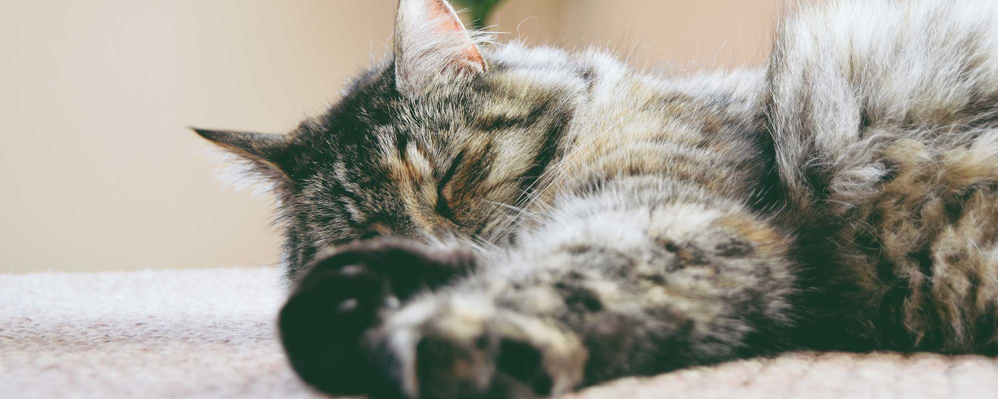 Photo of a beautiful cat peacefully sleeping