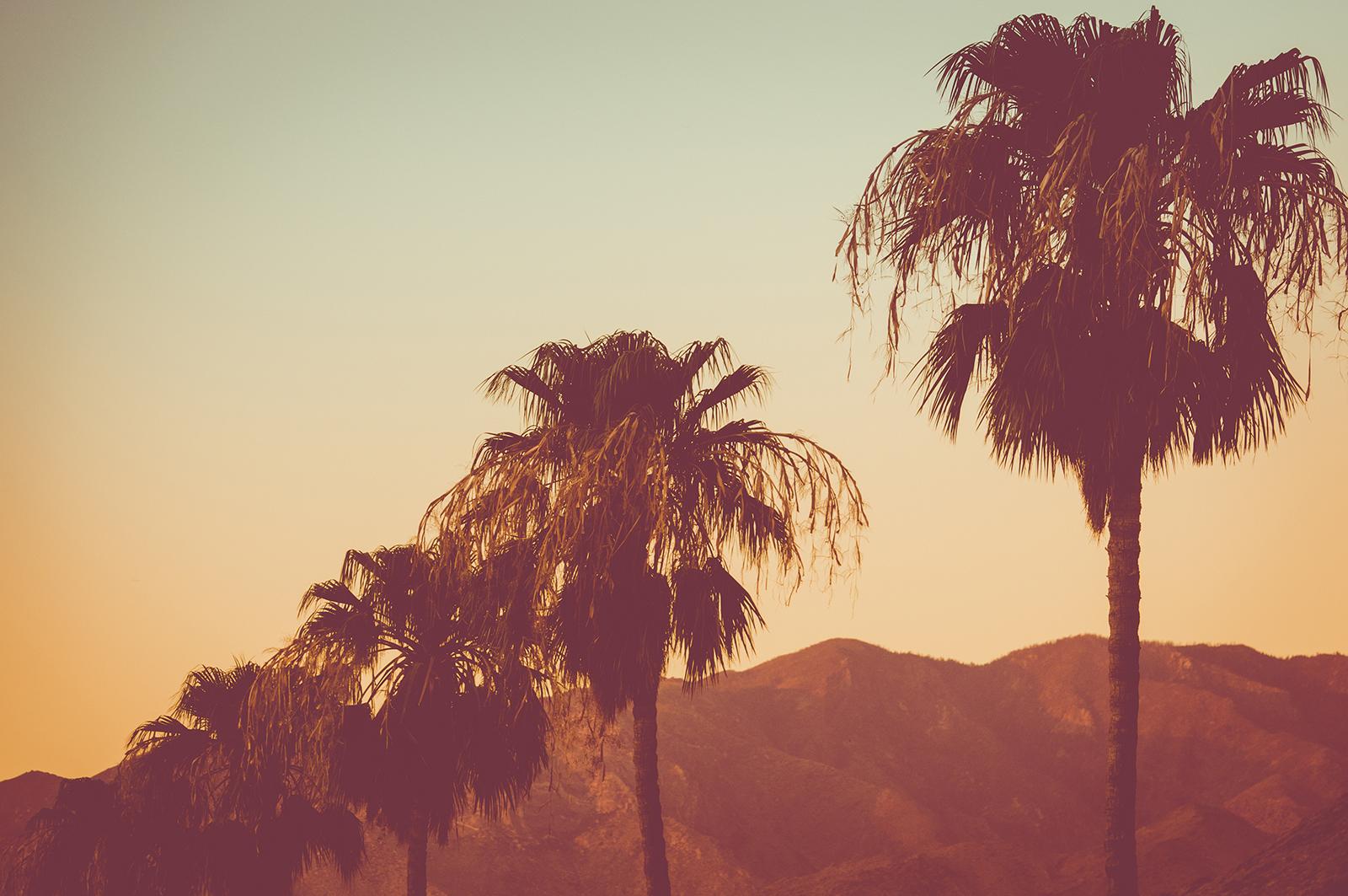 Coachella Valley Palm Trees