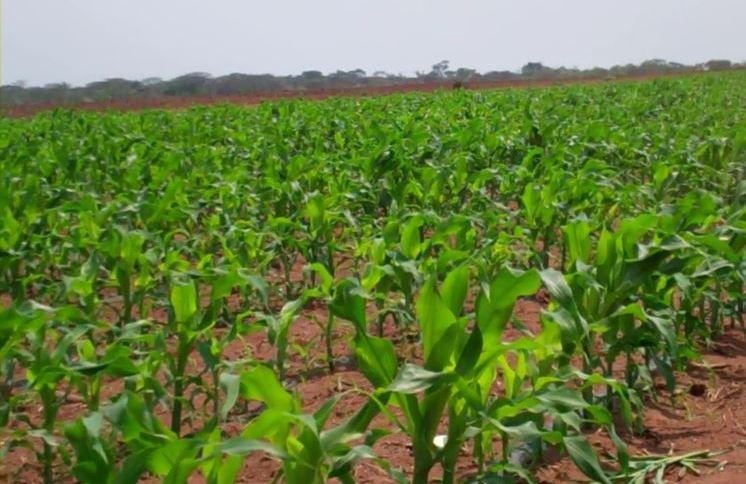 """""""Desafios e Perspectivas do Agronegócio em Angola"""" serão debatidos na Academia BAI"""