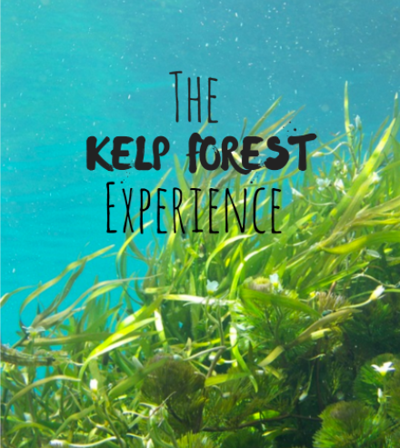 The Kelp Forest Experience at the Monterey Bay Aquarium