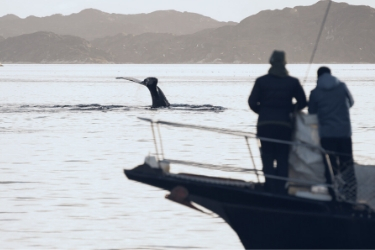 Couple watching a whale from a yatch