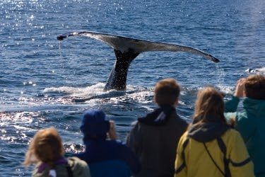 People enjoying watching a whale on the ocean