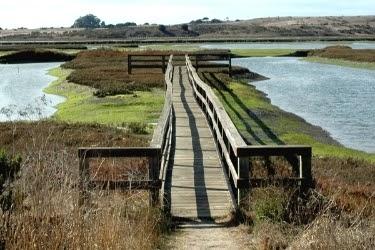 Bridge at Elkhorn Slough, California