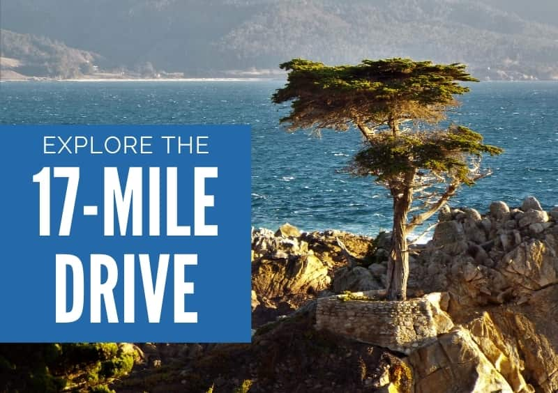 The Lone Cypress - Explore the 17-Mile Drive