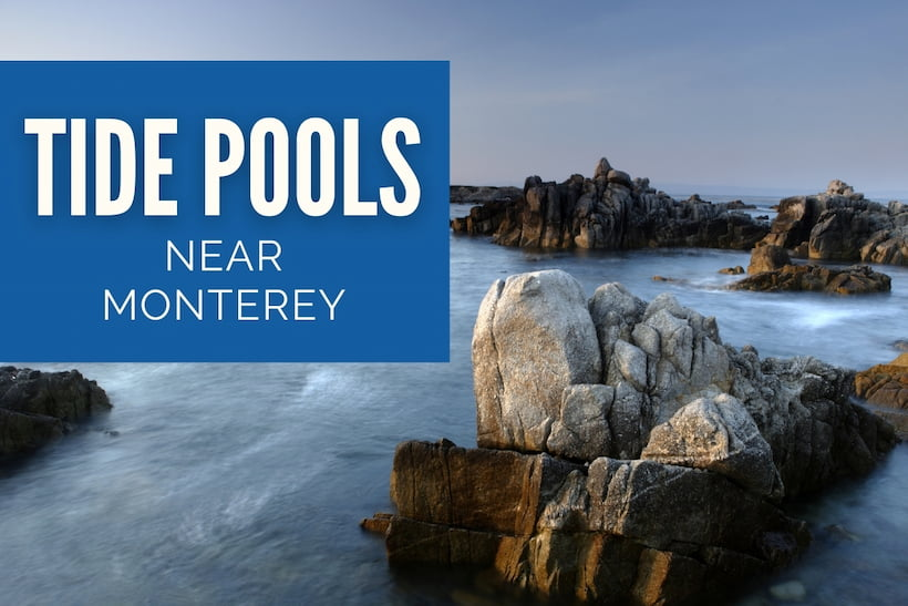 Tide Pools near Monterey - Asilomar State Beach