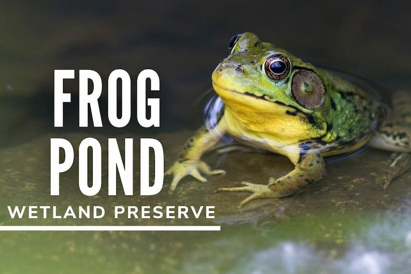 Frog Pond Wetland Preserve - Frog in a pond