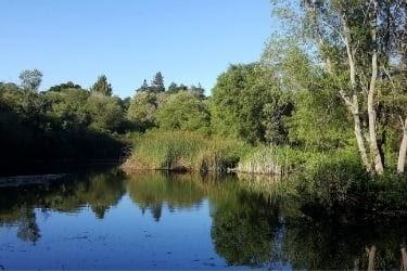 Frog Pond Wetlands