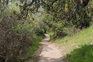 Hike near the pond