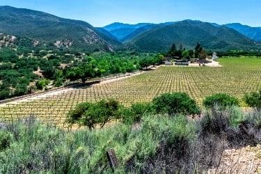 Vineyard in Monterey