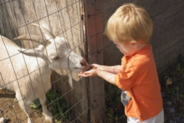 Kid petting a goat