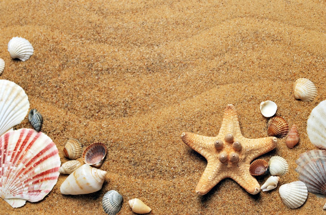 sand on a beach with sea shells