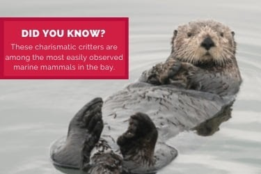 Informational Post - Did You Know? Otters