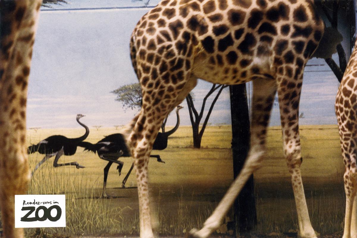 rendez-vous-im-zoo-1