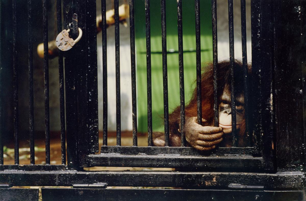 rendez-vous-im-zoo-6