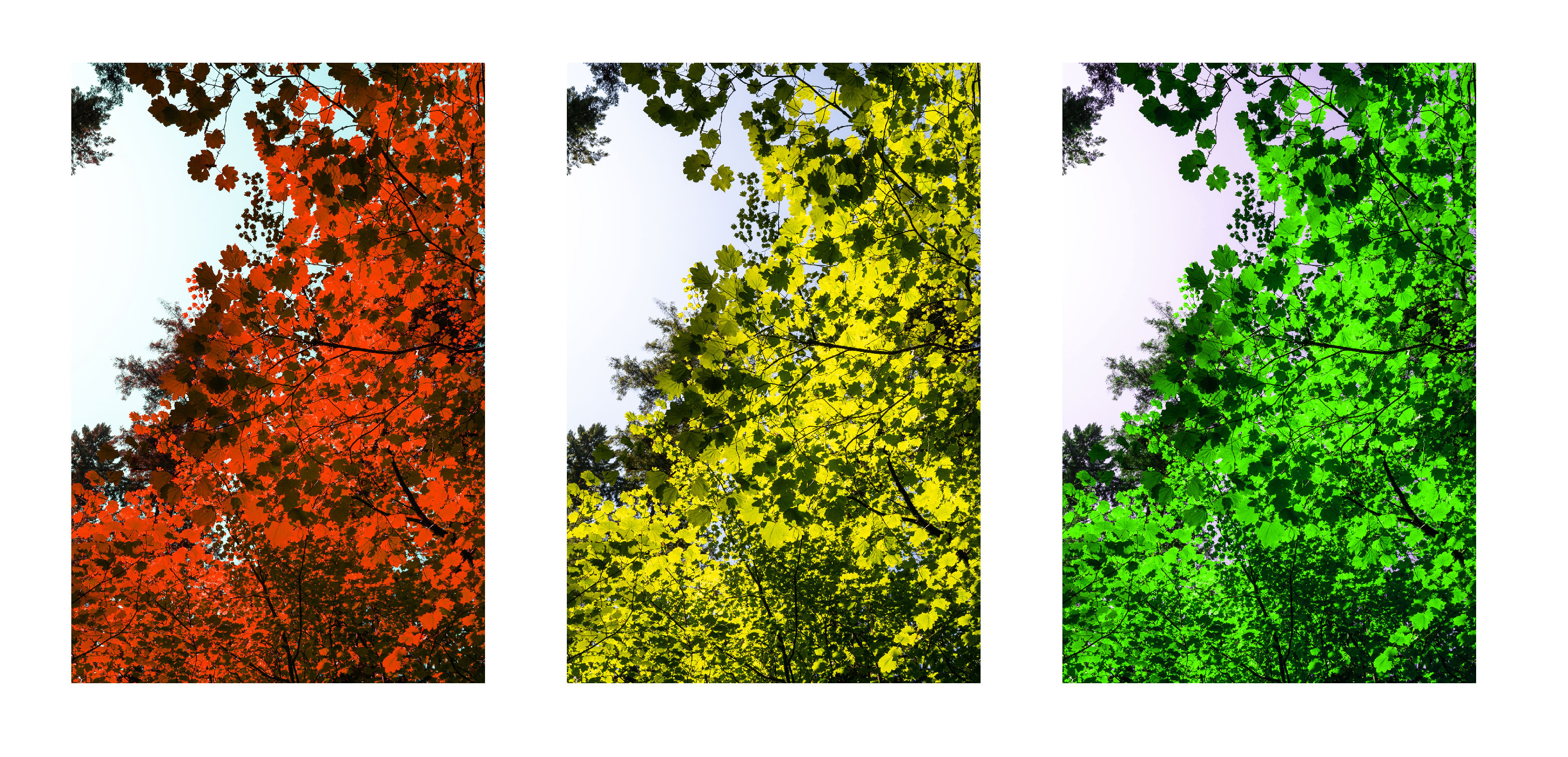 Different hues added to photograph of leaves
