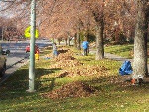 Salt Lake City Leaf Removal Services