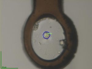Single crystal of Nsp10 frozen on a 0.08mm loop (photo from the Biomax beamline, MAX IV)