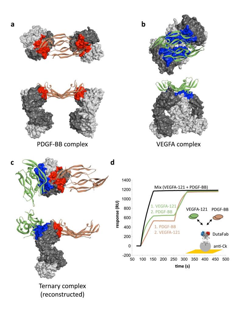 dutafabs, complexes VEGFA, PDGF