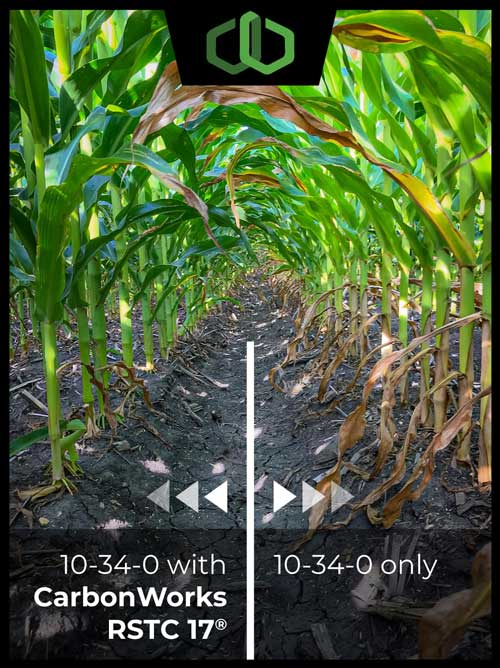 Side-by-Side comparison between CarbonWorks RSTC 17 and 10-34-0 on corn
