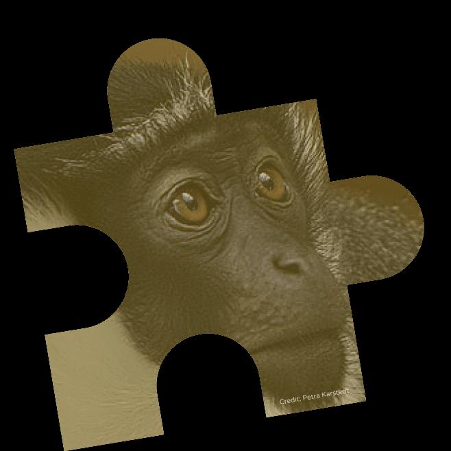 rolo monkey