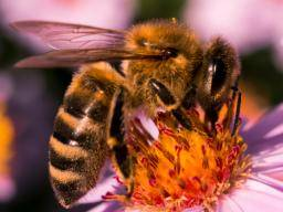 What to do if you're stung by a bee