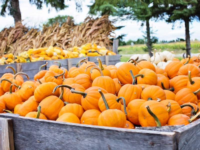 pumpkins in large wooden crate