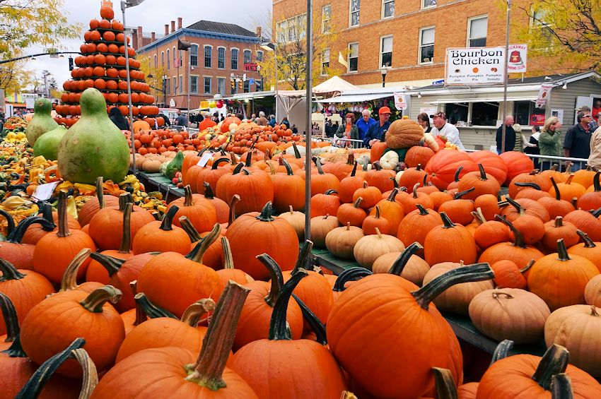 large amount of pumpkins at the circleville pumpkin show