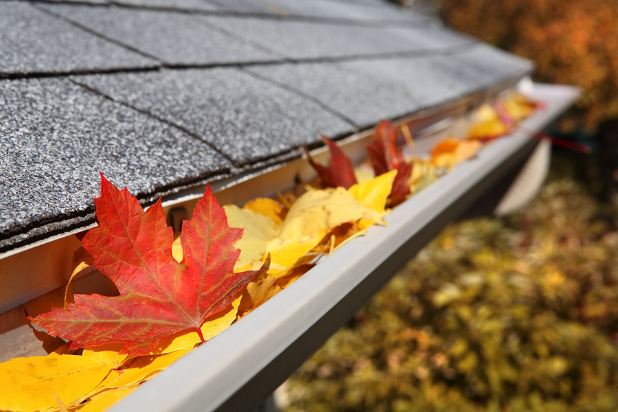 fall leaves in a gutter