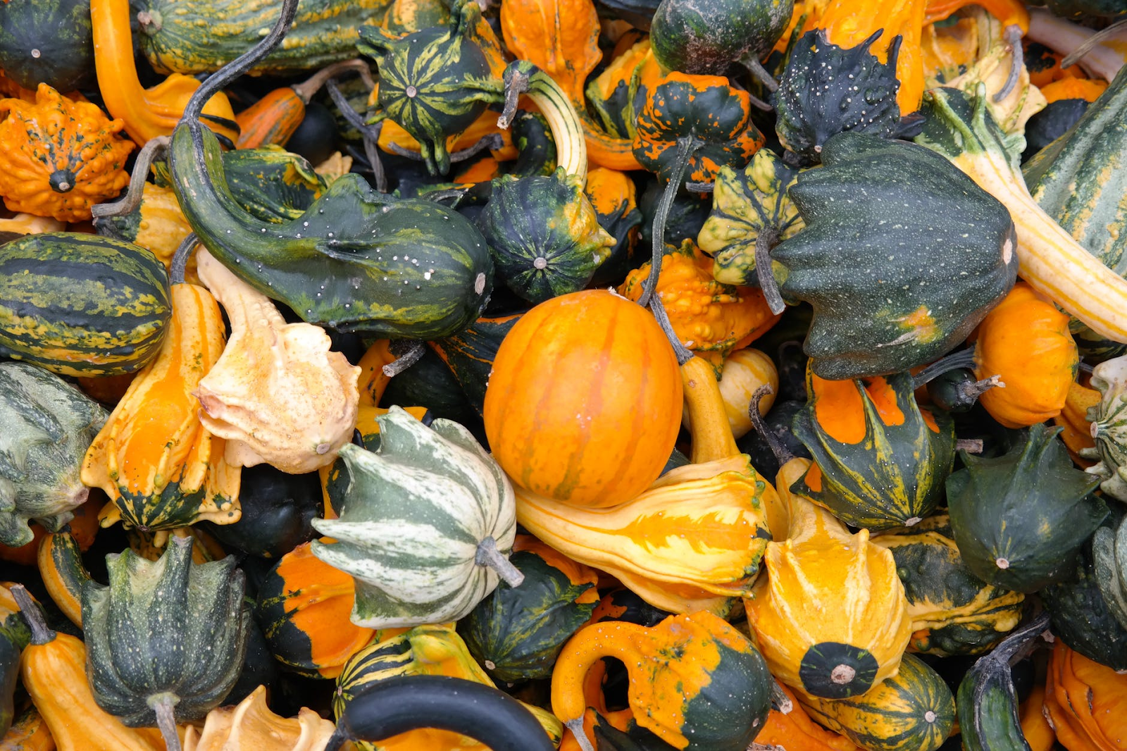 various kinds of squash