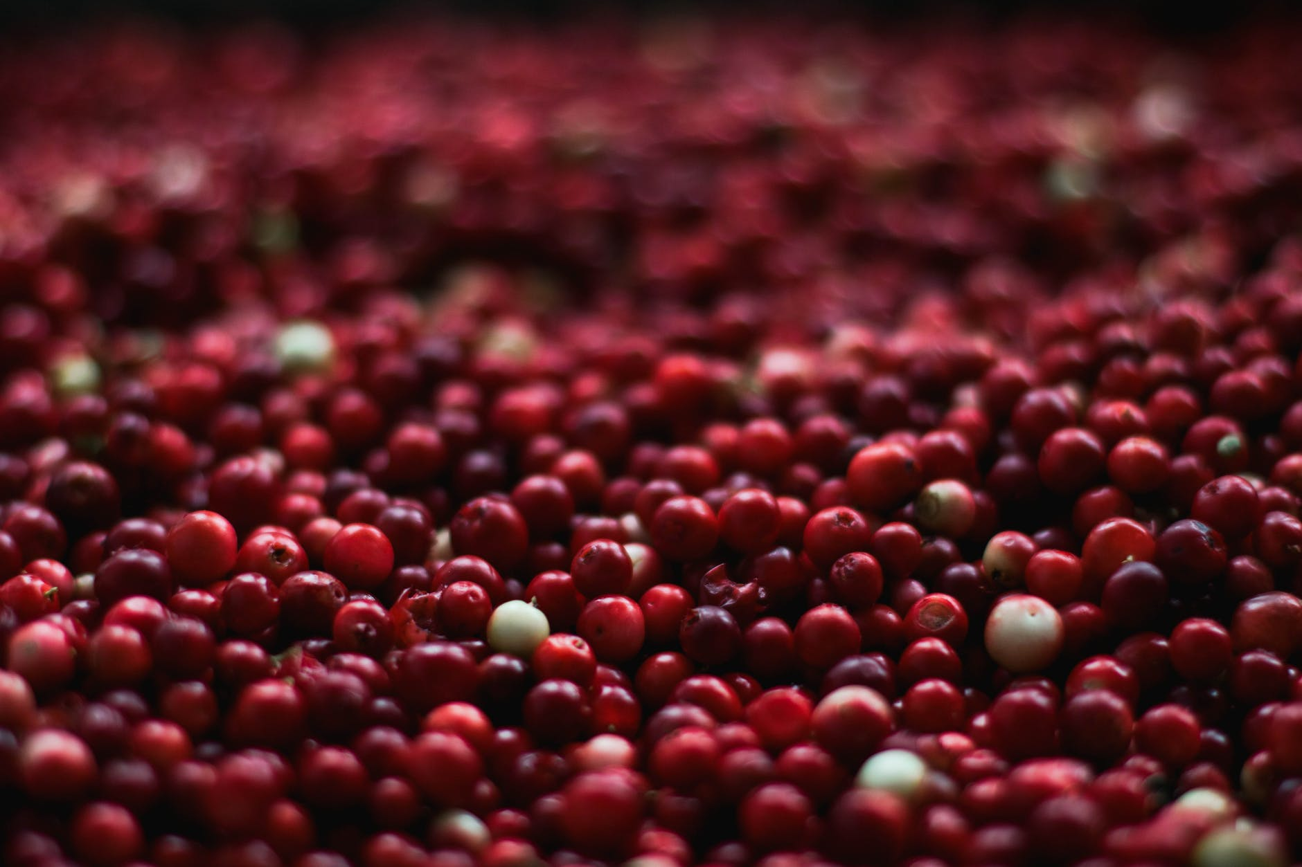a large amount of cranberries