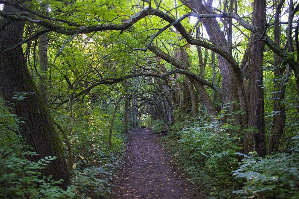 Wooded path in Sugar Creek Park